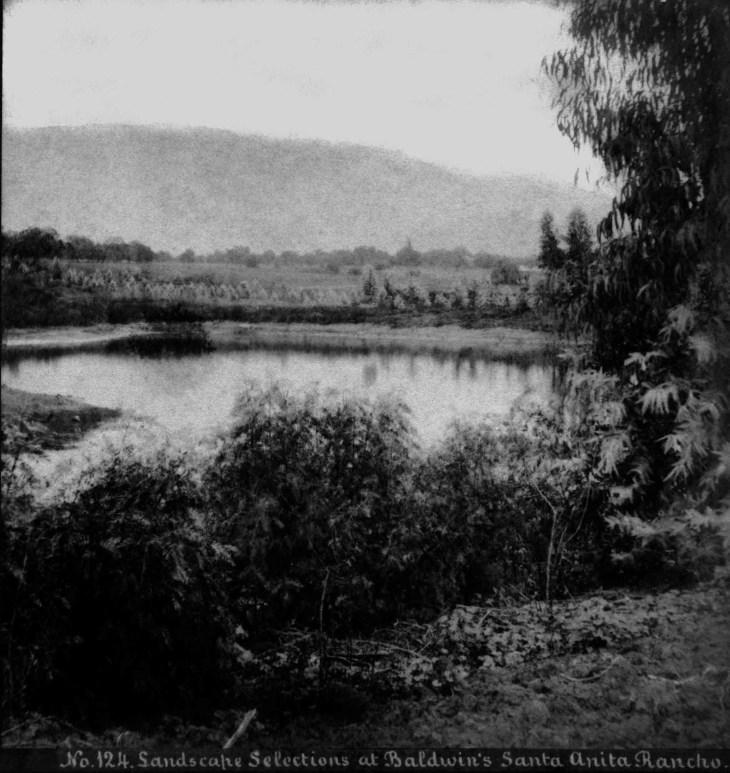 SV No 124 Landscape Selections At Baldwins Santa Anita Ranch 201
