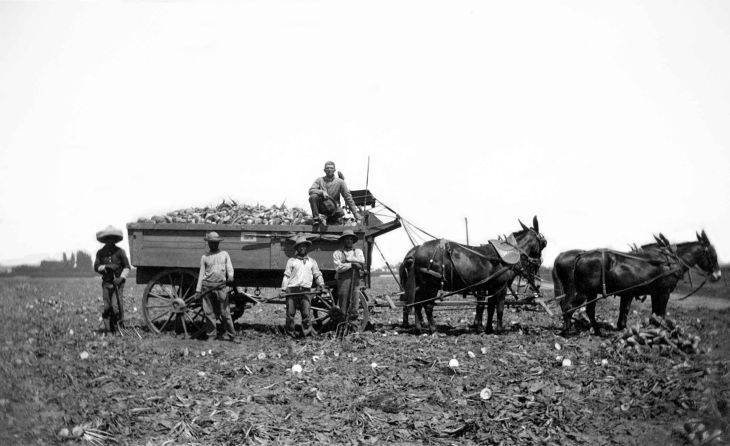 RPPC Sugar Beets On Wagon Hynes Calif 2013.235.1.1