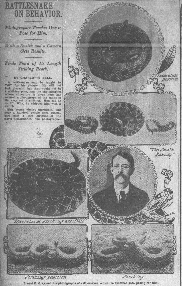 gray portrait w rattlesnakes times_oct_28__1906_