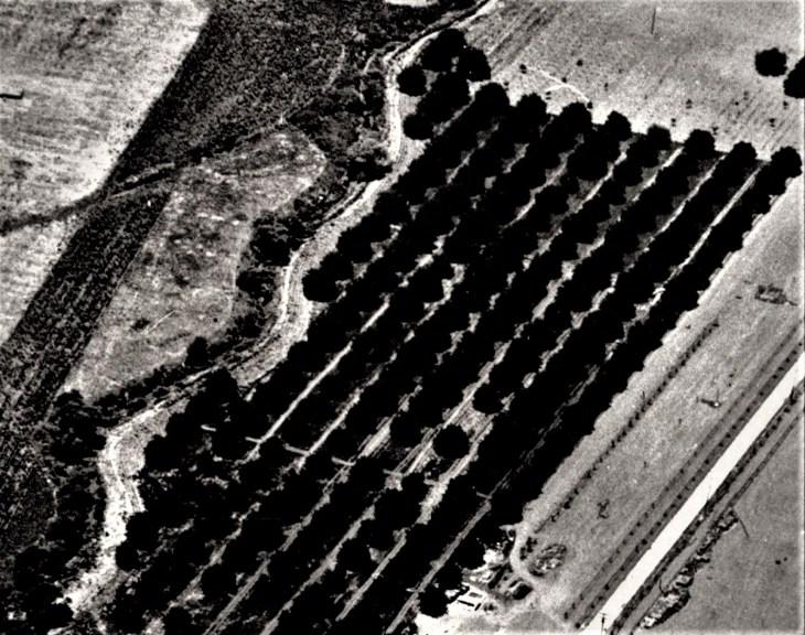 1921 Homestead aerial walnut orchard