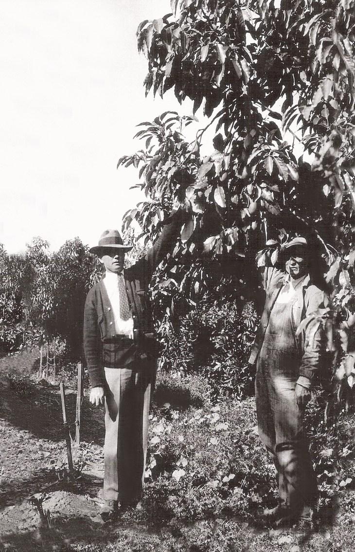 Edwin Hart in avocado grove in La Habra Heights in 1928