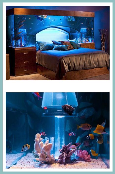 lit aquarium Brett Raymer Wayde King