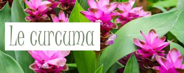 Curcuma présentation