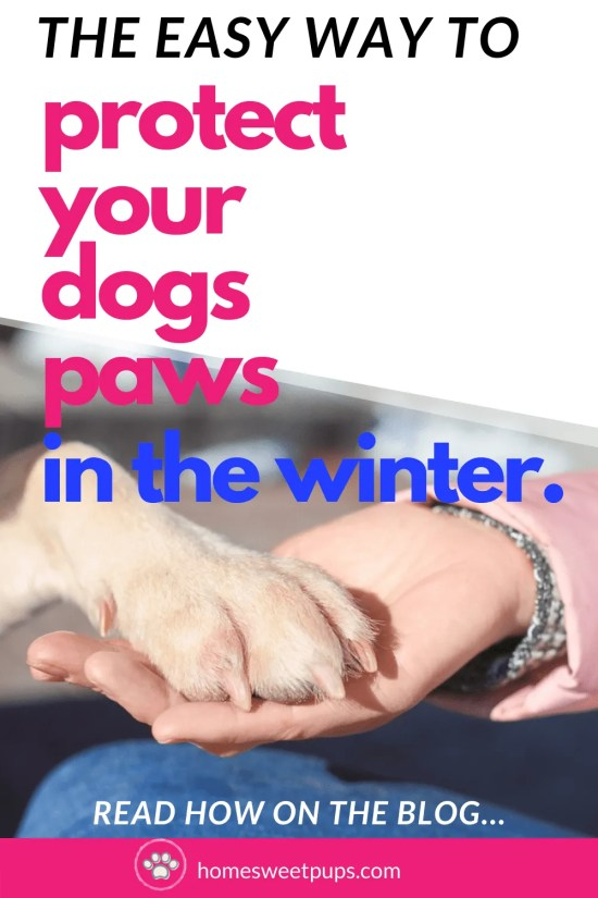 How to Protect your dogs paws in the winter holding your dog paw up.