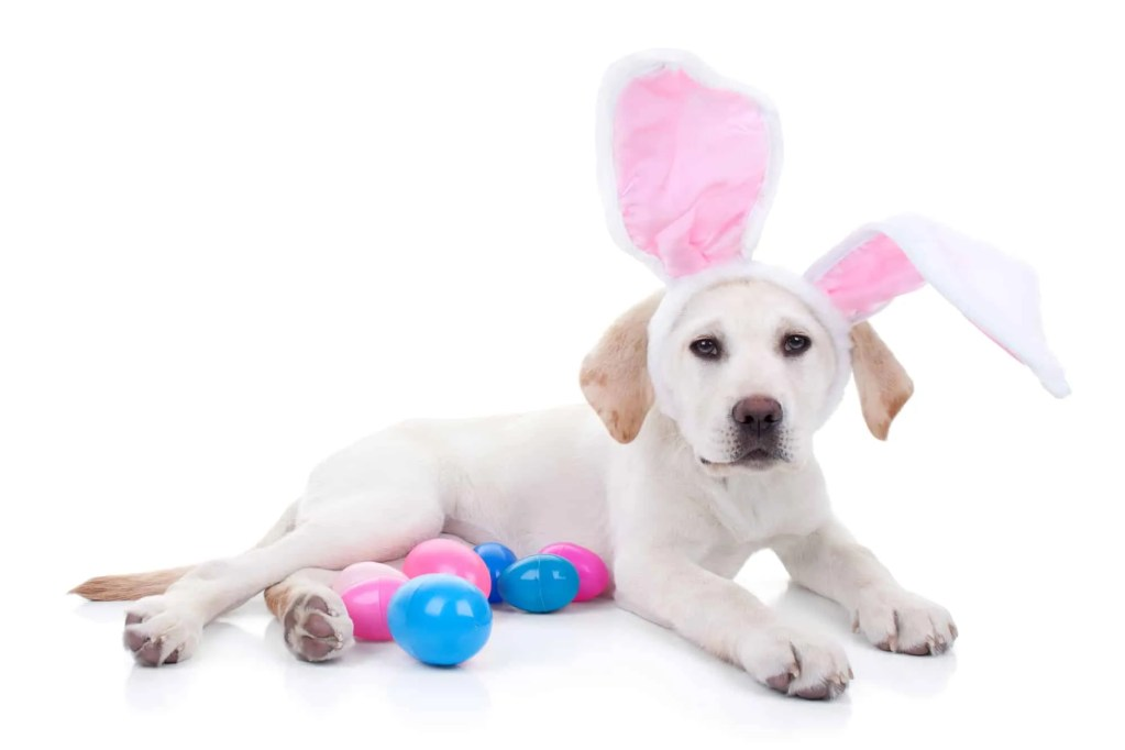 puppy with easter eggs