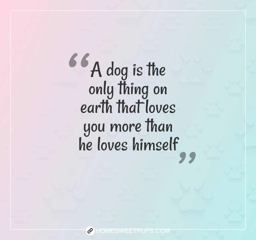 "Quote about dogs loyalty ""A dog is the only thing on earth that loves you more than he loves himself"""