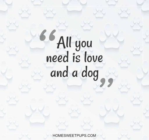 """Quote about Dogs Loyalty  """"all you need is love and a dog"""""""