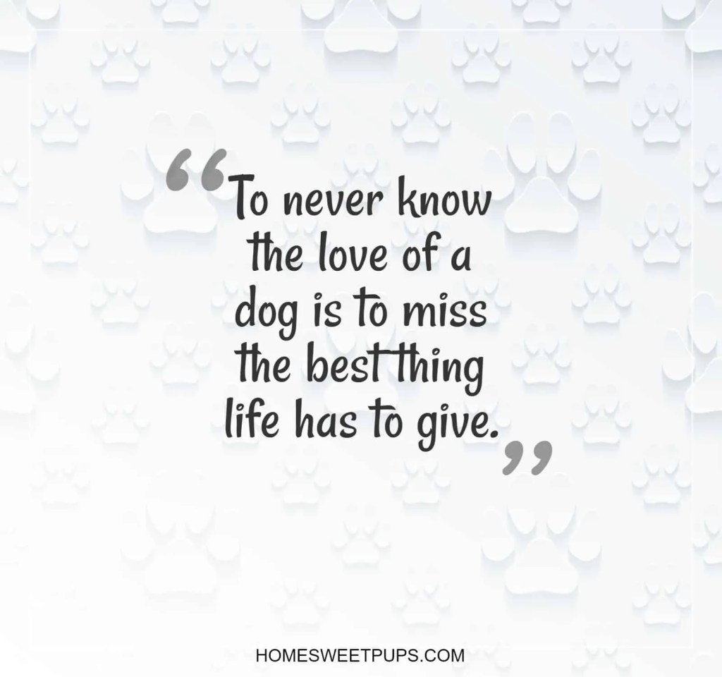 "Quote about dogs loyalty ""To never know the love of a dog is to miss the best thing life has to give"""