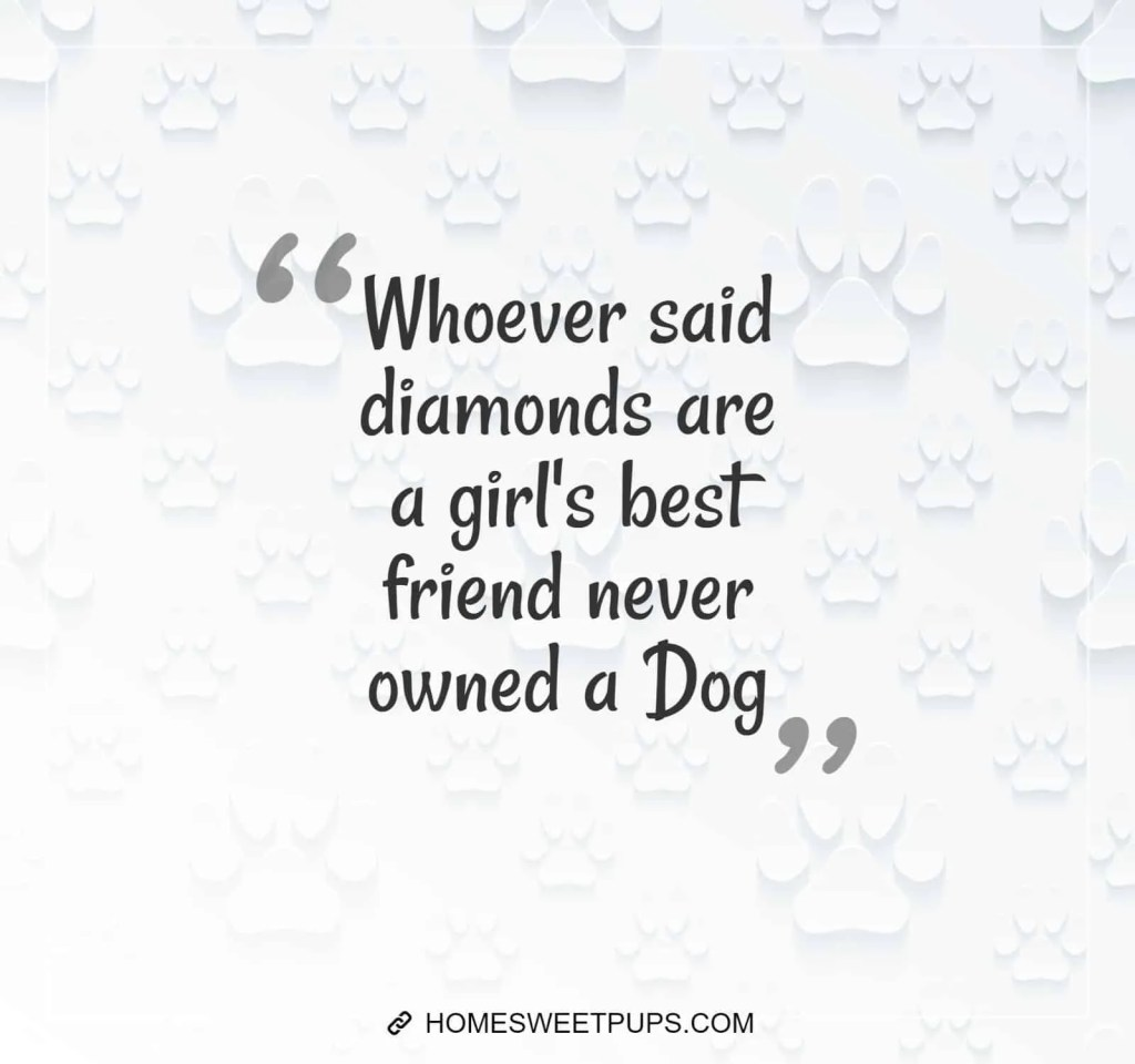 "Quote about dogs loyalty "" Whoever said diamonds are a girl's best friend never owned a dog"""