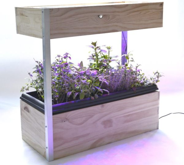 Led Kitchen Garden Year Around Counter Top Culinary Herb: The Kitchen Garden Lets You Grow Fresh Veggies All Year