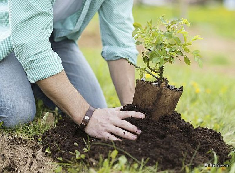 Planting-the-tree-deep-inside