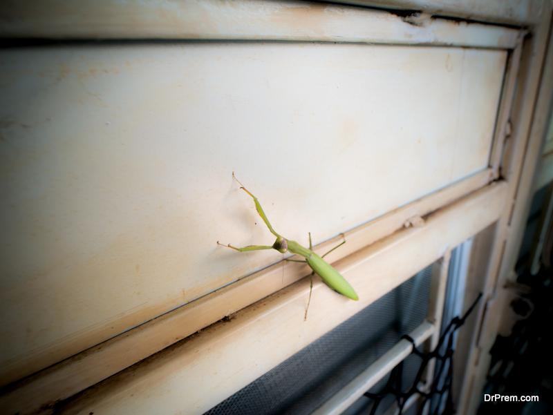 Keep-Your-Home-Pest-Free-This-Season.