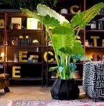 Apartment Indoor Gardening With Tropic Indoor Plants 33