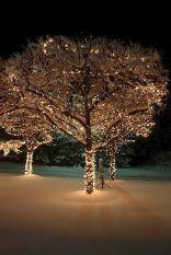 Superb Outdoor Christmas Lights Decoration Ideas