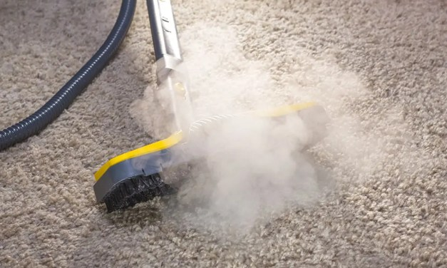 How to Kill Mold in Carpet in 10 Easy Steps