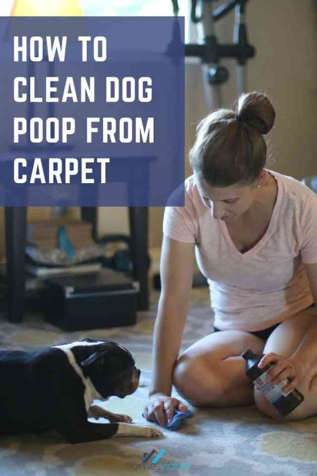 How to Clean Dog Poop from Carpet  HomeViable