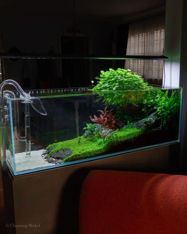 Stunning iwagumi aquascape for home decorations channingmiskel (source instagram)