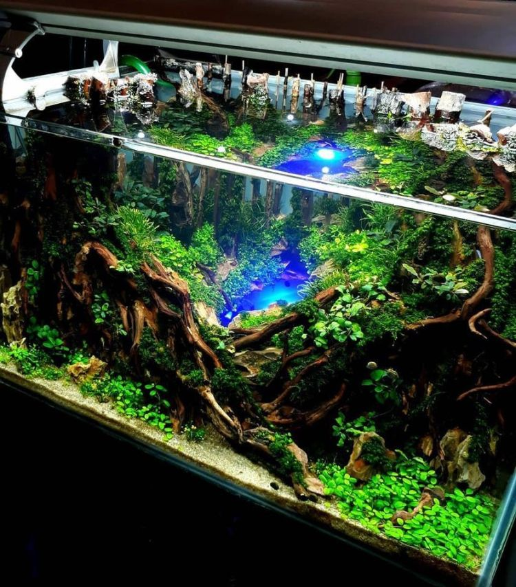 Stunning iwagumi aquascape for home decorations jeffry bucex happyfish.indo (source instagram)
