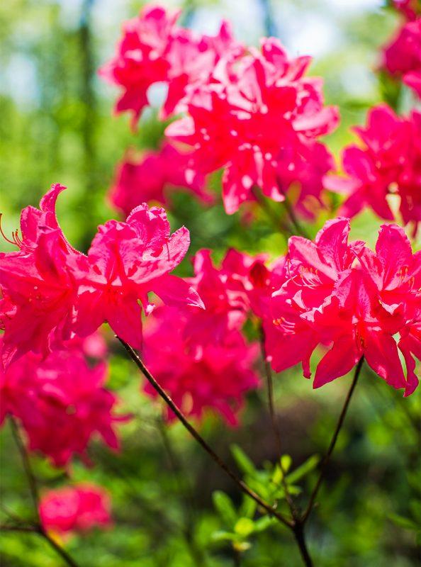 Flowering Shrubs by Season | Better Homes & Gardens