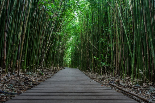 Giant Bamboo   Cahill Films