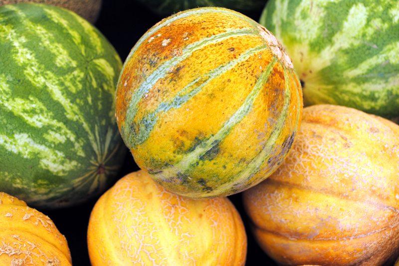 Melons 101: A Farmers Market Guide | CUESA