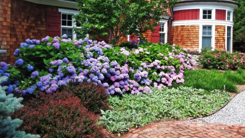 Mid-Sized Shrubs For A Layered Border – Grow Beautifully