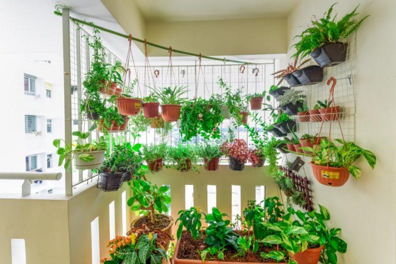 D:\@ARSIP\2020\NOVEMBER\Großer-Balkon-mit-Kletterpflanzen-als-Sichtschutz.jpg