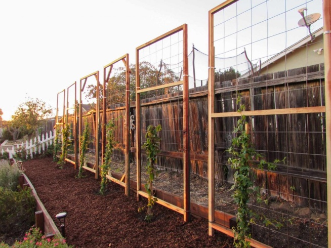 How to Build a Trellis: Inexpensive & Easy Designs ~ Homestead and Chill