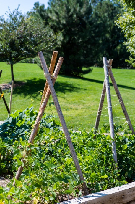 How to Create a Trellis in Your Garden | HGTV