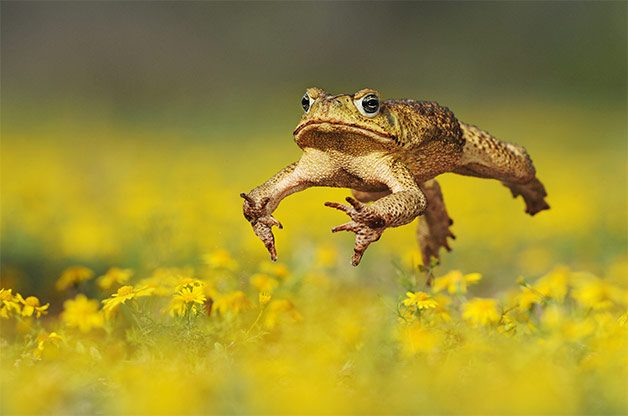 Why Toads are Valuable in the Garden | Birds & Blooms