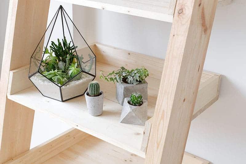 Create a Mini Garden