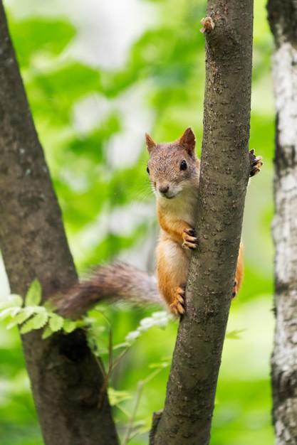 Curious squirrel on a tree in its natural habitat Premium Photo