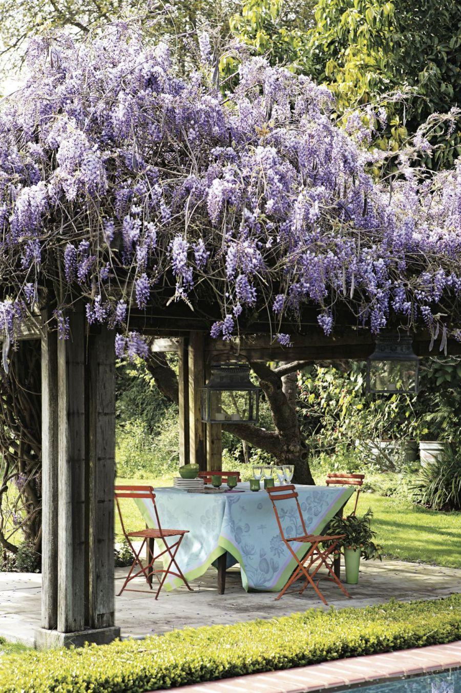 wisteria trellis pictures