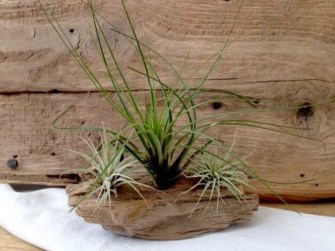 Amazing Air Plants Decor Ideas 06
