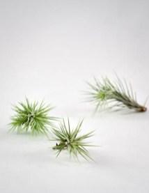 Amazing Air Plants Decor Ideas 17