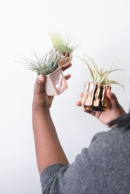 Amazing Air Plants Decor Ideas 19