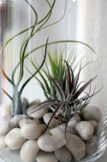 Amazing Air Plants Decor Ideas 24