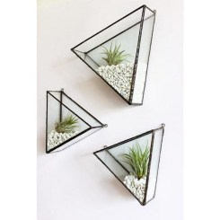 Amazing Air Plants Decor Ideas 27