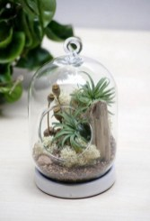 Amazing Air Plants Decor Ideas 28