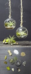 Amazing Air Plants Decor Ideas 30