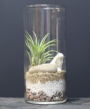 Amazing Air Plants Decor Ideas 33