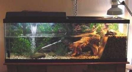 Amazing Aquarium Design Ideas Indoor Decorations 14