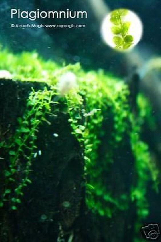 Amazing Aquarium Design Ideas Indoor Decorations 18