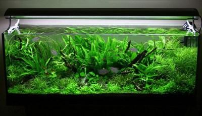 Amazing Aquarium Design Ideas Indoor Decorations 30