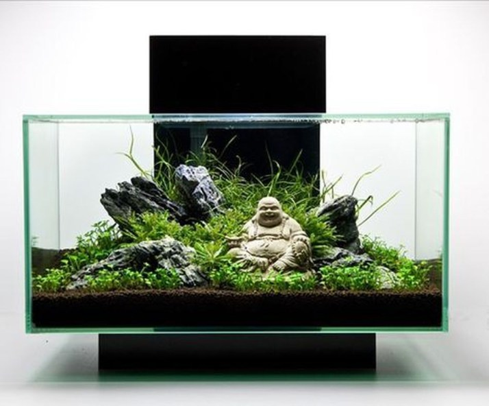 Amazing Aquarium Design Ideas Indoor Decorations 33