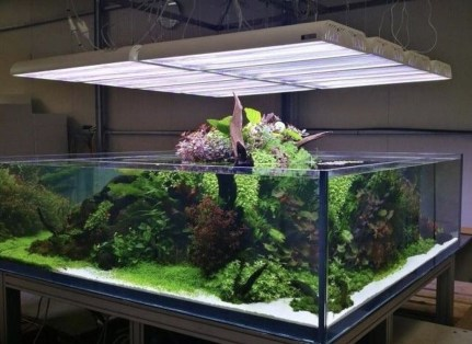 Amazing Aquarium Design Ideas Indoor Decorations 37