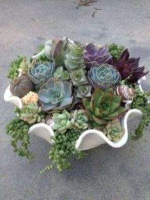 Amazing Diy Succulents Indoor Decorations 16