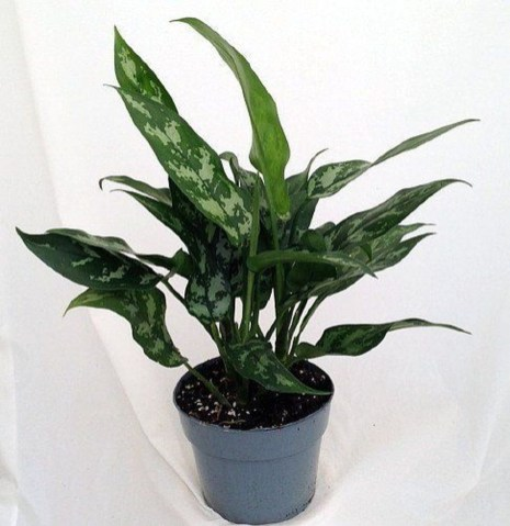 Amazing Easy Low Light Houseplants Indoor Decor 06