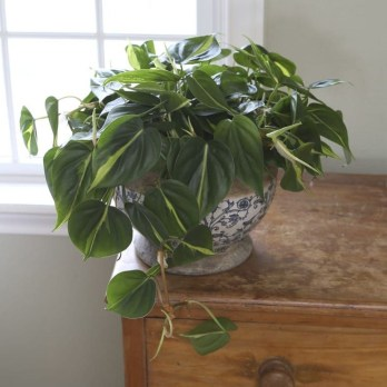 Amazing Easy Low Light Houseplants Indoor Decor 13