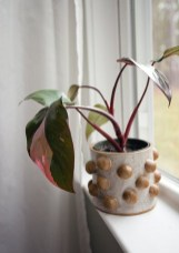 Amazing Easy Low Light Houseplants Indoor Decor 18